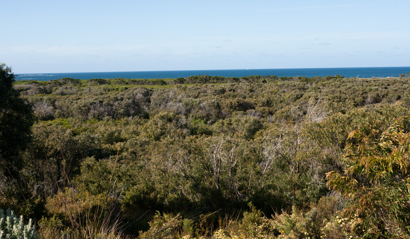 Coastal-Heath-conservation
