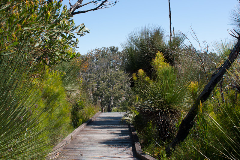 Mt-chudalup-board-walk