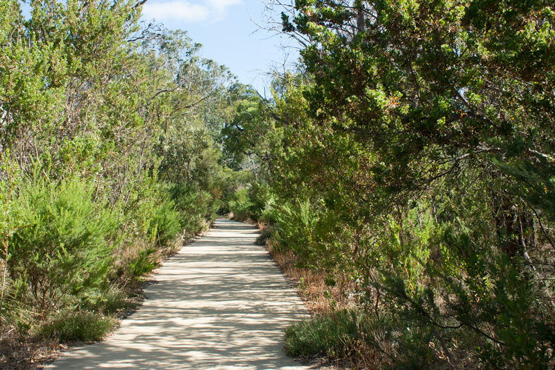 Nature-Trail-Kings-Park