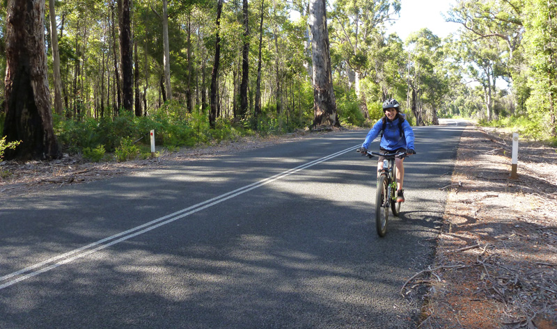 Riding-through-Karri-section