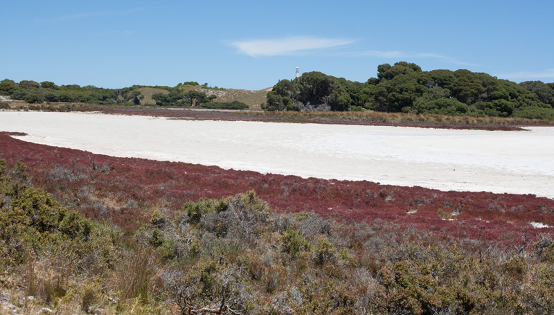 Salt-lake-rottnest