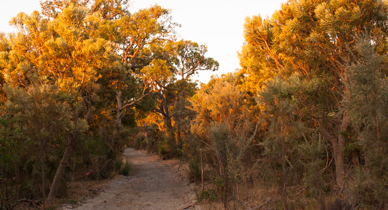 Sunset-colours-shentonbushland
