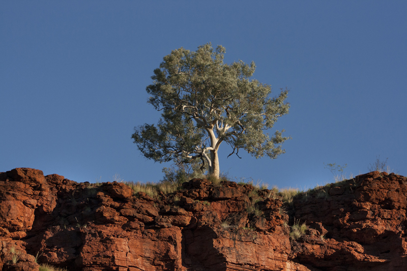 Dales Gorge looking up