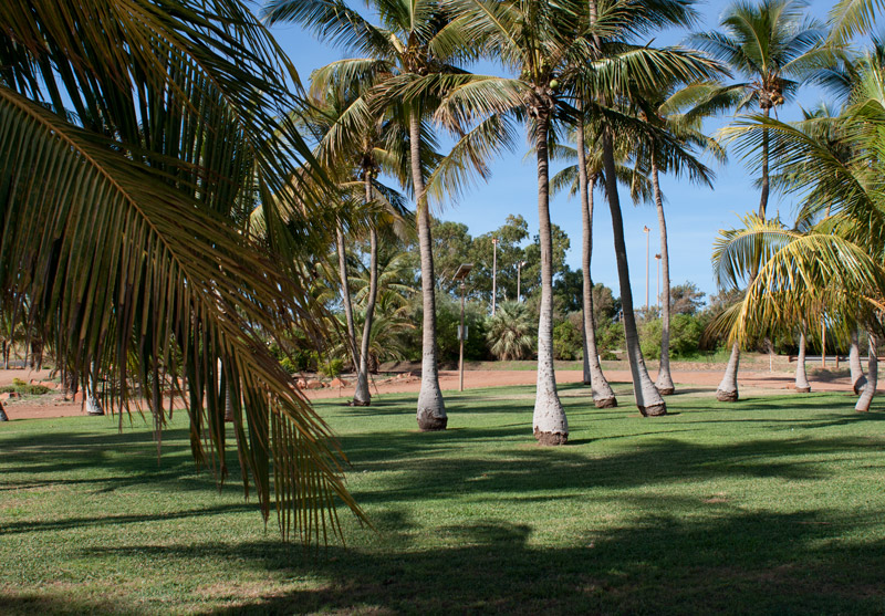 Dampier-Coconut-trees