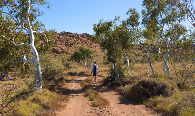 Murujuga-Tree-walk-Karratha